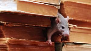 Ученые создали наночастицы, «научившие» мышей видеть тепло